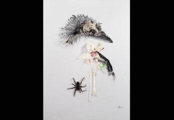 Beautiful Macabre by Jennifer Woodhouse