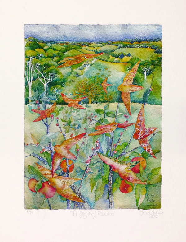 Fine art reproduction from original watercolour by Janet Ayliffe