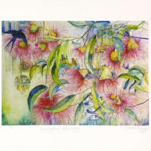Eucalyptus Leucoxylon, by Janet Ayliffe, Kangaroo Island artist and printmaker