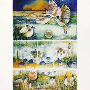 The Sacred Ibis - archival quality print by Janet Ayliffe