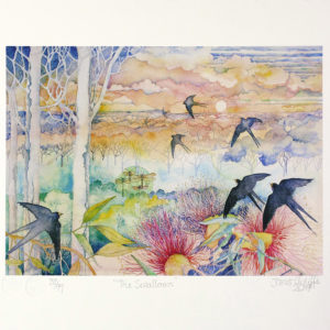 Swallows, reproduction from original watercolour by popular artist and printmaker Janet Ayliffe