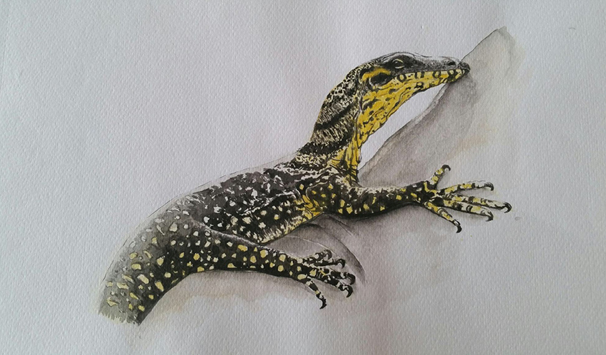 Lace Monitor, watercolour by Gabrielle Jones. Prints available for sale.